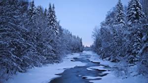 Фотография Финляндия Реки Зимние Леса Снег Деревья Природа