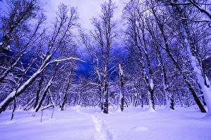 Обои Зима Леса Негр Деревья Природа фото