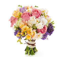 Фото Букет Розы Фрезия Нарциссы Белым фоном цветок