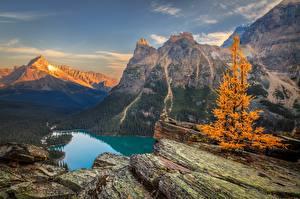 Фотографии Гора Пейзаж Осень Озеро Канада Парки Скалы Yoho Lake O'Hara Природа