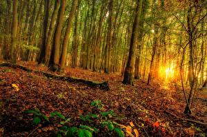 Фотография Леса Рассветы и закаты Деревья Природа