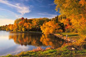 Обои Побережье Леса Осень Озеро Природа фото