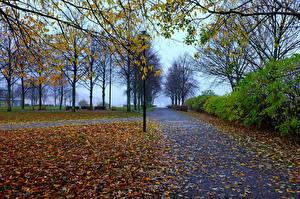 Фотографии Парки Осень Тротуар Деревья Природа