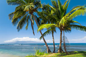Обои США Побережье Океан Гавайи Пальмы Деревья Природа фото