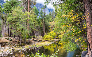 Обои США Парки Леса Реки Йосемити Калифорния Деревья Природа фото