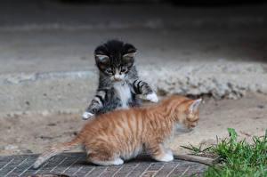 Фото Кошка Котенка Два Животные