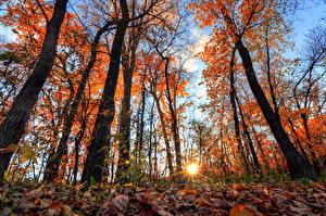 Картинка Леса Рассветы и закаты Осень Деревья Лучи света Природа