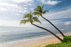 Обои США Побережье Волны Небо Океан Гавайи Пальмы Песок Природа фото