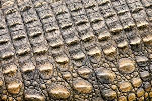 Картинки Текстура Крокодилы