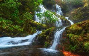 Фотографии США Водопады Мох Panther Creek Falls, Columbia River Gorge, Skamania Природа