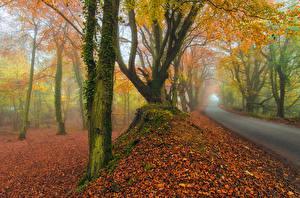 Обои Дороги Осень Деревья Туман Природа фото