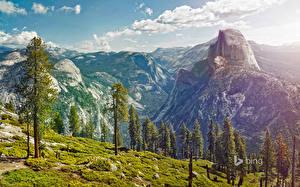 Обои Горы Пейзаж США Парки Деревья Йосемити Природа фото