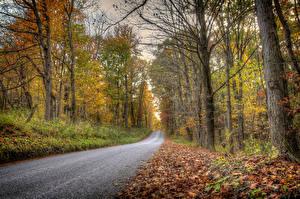 Обои Дороги Осень Леса Деревья Природа фото