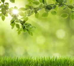 Фотографии Трава Листья Природа