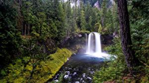 Обои Леса Водопады Деревья Природа