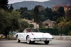 Картинки Chevrolet Ретро Белый Кабриолета Вид сзади 1960 Corvette 283-245 HP (868) машины