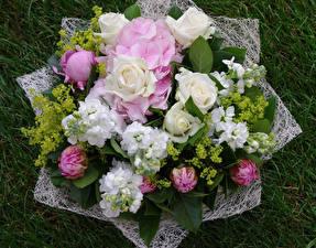 Фото Букеты Розы Гортензия Левкой Пионы Цветы