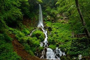 Фотография Водопады Трава Природа