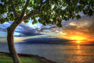 Обои США Рассветы и закаты Побережье Океан Деревья Гавайи HDR Природа фото