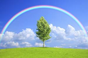 Обои Небо Облака Радуга Деревья