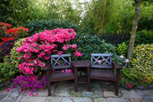 Фотография Англия Сады Рододендрон Скамья Кусты Walsall Garden Природа