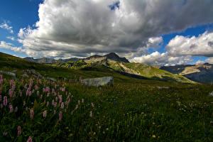 Картинки Франция Пейзаж Горы Люпин Трава Облака Colmars Природа