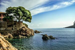 Обои Испания Побережье Море Скала Деревья Costa Brava Природа фото