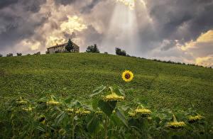 Обои Италия Подсолнухи Поля Природа фото