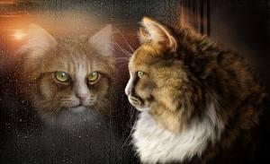 Обои Коты Стекло Окно Животные Фэнтези