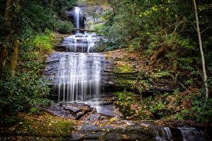 Обои США Водопады Деревья Georgia Природа фото