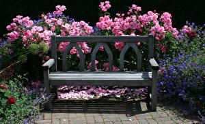 Картинки Великобритания Сады Розы Скамейка Rosemoor Gardens цветок