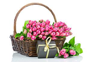 Картинки Тюльпаны Много Корзинка Розовый Подарки Белый фон Цветы