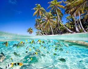 Обои Тропики Побережье Рыбы Пальмы Деревья Природа фото