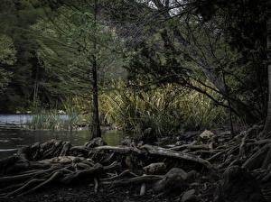 Картинки Штаты Леса Озеро Техас Austin Природа