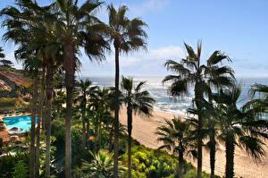 Обои США Побережье Пальмы Деревья Laguna Beach Природа фото