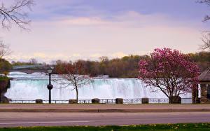 Фотографии Канада Водопады Цветущие деревья Niagara Falls