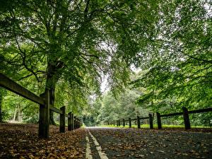 Обои Дороги Осень Забор Деревья Природа фото