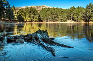 Картинки Франция Озеро Леса Пень Дерева Corsica Природа