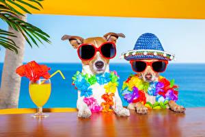 Фотография Собаки Сок Два Джек-рассел-терьер Чихуахуа Очков Шляпе Бокалы Смешной Животные Юмор