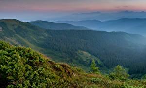 Картинка Украина Горы Леса Карпаты Закарпатье