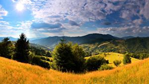 Картинка Украина Пейзаж Горы Карпаты Ель Трава Облака