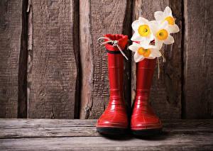 Картинка Нарциссы Сапогов цветок
