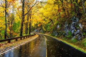 Обои Дороги Осень Парки США Деревья Great Smoky Mountains Природа фото