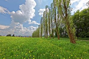 Обои Германия Одуванчики Луга Небо Деревья Трава Облака Hontheim Природа фото