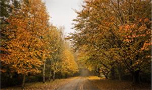 Обои Дороги Осень Деревья Природа фото