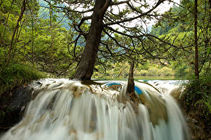 Картинка Китай Парки Водопады Цзючжайгоу парк Ствол дерева Природа