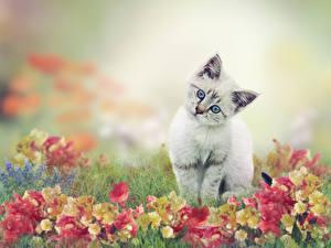 Обои Коты Котята Смотрит Трава Животные