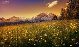 Обои Швейцария Горы Одуванчики Пейзаж Луга HDR Альпы Природа фото