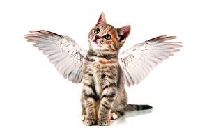 Обои Кошки Ангелы Котята Крылья Белый фон Животные фото