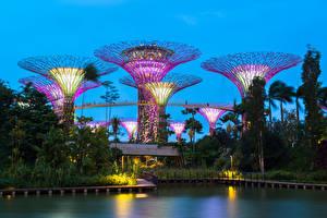 Фотографии Сингапур Пруд Парки Деревьев Gardens by the Bay Природа